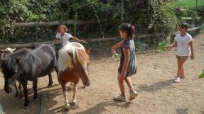Ponies 03